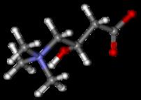 202px-Carnitine_ball-and-stick